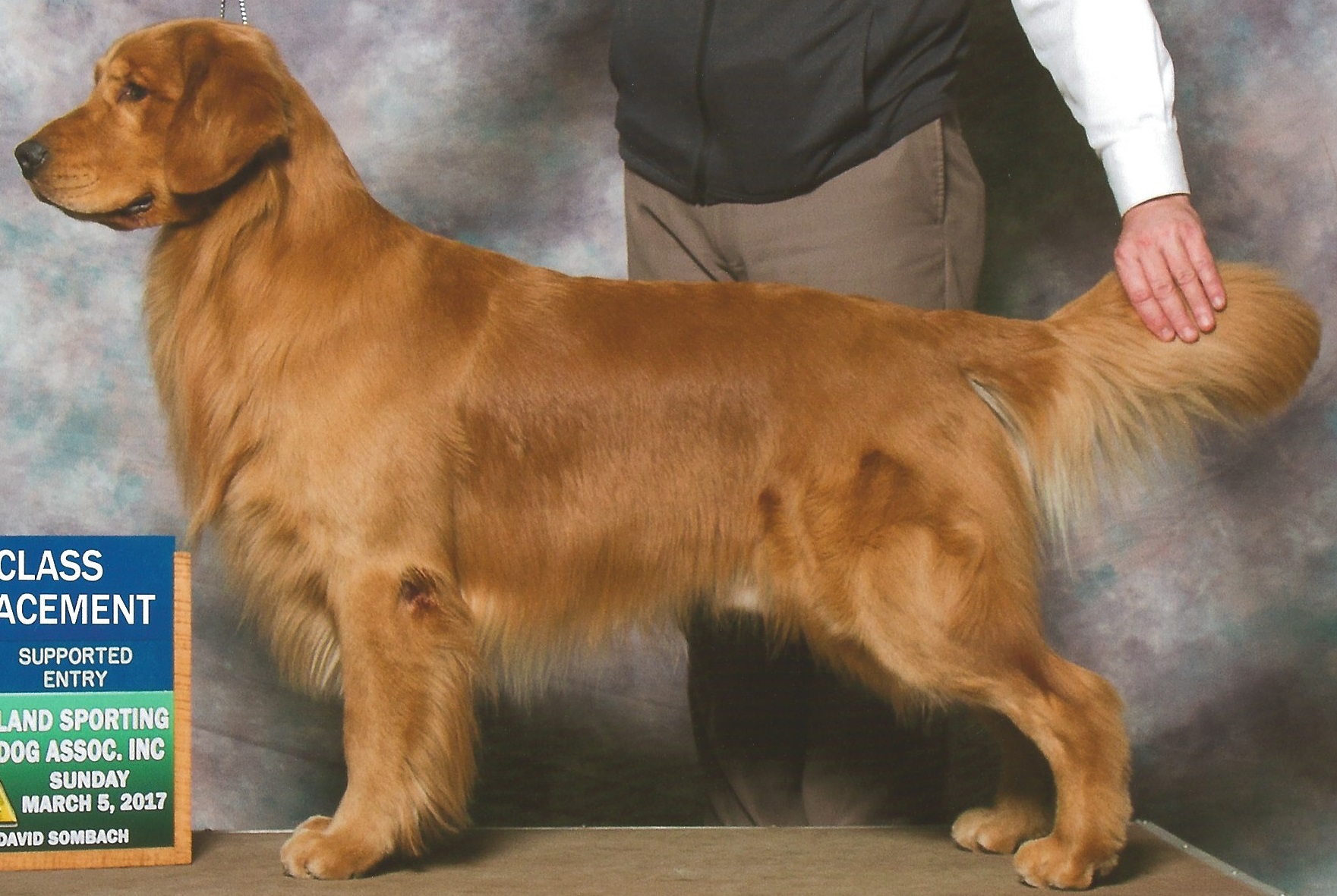 Carson – Golden Retriever